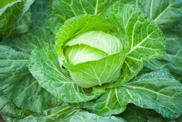春の紫外線対策には旬の春野菜がおすすめ