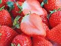 魅惑のフルーツ「いちご」の栄養と正しい選び方