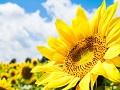 夏バテの原因と対策を知って猛暑を乗り切ろう