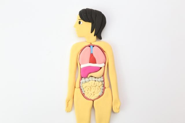異所性脂肪